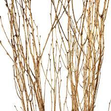Decorative Branches