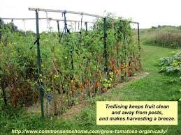Growing Cucumbers Up A Trellis Transform Your Landscape With Vertical Gardening Grow More Food