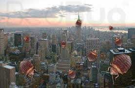 Bed Bugs New York City Top 10 Bed Bug Cities In 2013 Did Your City Make The List