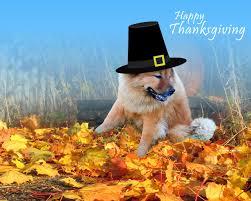 free desktop backgrounds thanksgiving wallpapersafari