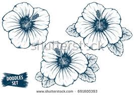 hibiscus flower sketch tropical plant doodle stock vector