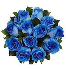 blue roses 100 real fresh blue roses and amazing