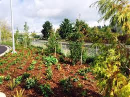 native plantings tri met u0027s orange line landscapes bybee stop to oak grove