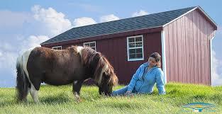 barns for miniature horses small horse barns horizon structures