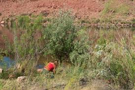 colorado native plants list nonnative plants glen canyon national recreation area u s