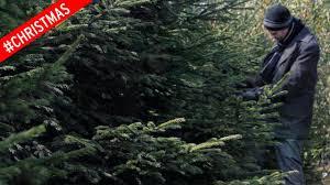 crackers guests bemused as premier inn u0027s christmas tree
