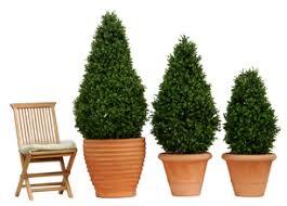 Laurel Topiary - plantart outdoor artificial topiary bay laurel trees boxwood