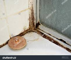 Types Of Mold In Bathroom by Mold In Bathroom Dangerous Molds In Bathroom Dangerous View Here