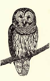 owl tattoo simple 35 best owls images on pinterest printmaking owl art and drawings