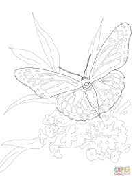 monarch butterfly coloring page free printable coloring pages