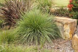australis plants australian native plants top 10 greenroof plants for south australia ozbreed