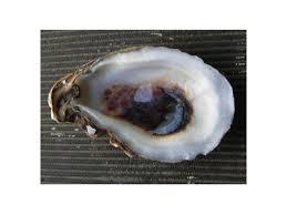 32 best oyster bar menu redesign images on pinterest oyster bar