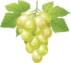 cartoon wine png grape png image free picture download