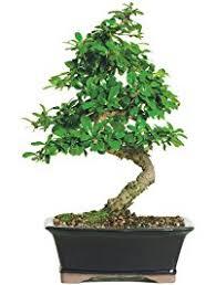 plants seeds u0026 bulbs amazon com