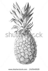 pineapple drawing stock illustration 387533455 shutterstock