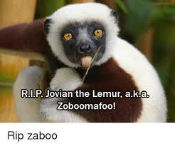 Lemur Meme - 25 best memes about zoboomafoo rip zoboomafoo rip memes