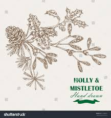 hand drawn christmas plants mistletoe holly stock illustration