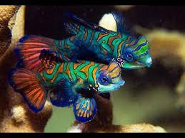 yap u0026 rainbow coloured fish