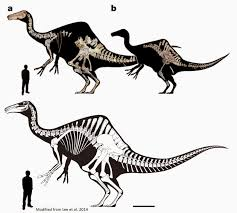 supplementary information for holtz u0027s dinosaurs