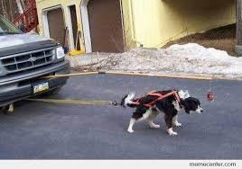 Dog In Car Meme - dog car by ben meme center