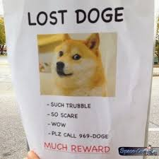 Lost Doge Meme - doge doges website