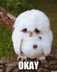 Sad Meme Generator - sad owl weknowmemes generator