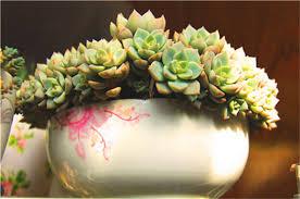 bulk flower bulbs promotion shop for promotional bulk flower bulbs