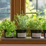 indoor balcony garden ideas archives gardening guide