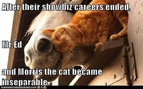 Mr Ed Meme - animal capshunz mr ed funny animal pictures with captions