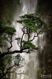 Ex Machina Waterfall 141 Best Et Al Images On Pinterest Gig Poster Ideas And Screen