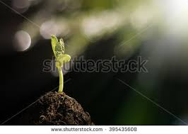 Light And Day Young Plant Growing Morning Light Green Stock Photo 394325878