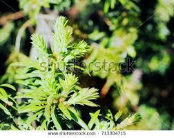 botanical sts background shoots plants city botanical stock photo