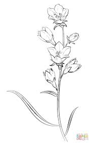 printable baby u0027s breath flowers coloring pages for kids printable
