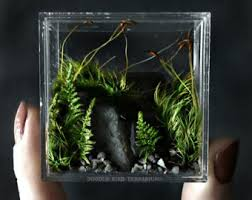 scientific moss ball terrarium in large glass beaker marimo