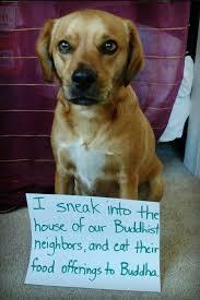 Bad Dog Meme - the best bad dog memes memedroid