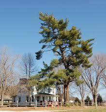 mhp trees