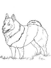 mammals coloring pages 113 best favorite dog colouring pages images on pinterest dog