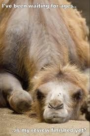 Camel Memes - vdu s blog may 2014