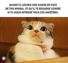 Meme Chat - 195 best humour images on pinterest humor humour funny stuff and cats