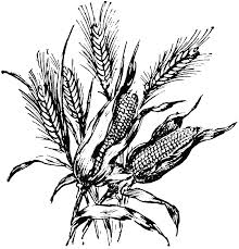 free corn clipart coloring pages 2 clipartix