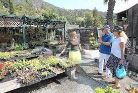 Native Plant Nursery Los Angeles Ca Laguna Beach To Lose Its Two Nurseries La Times