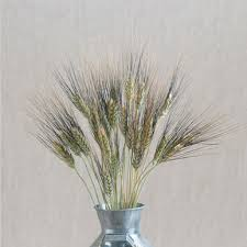 black tip wheat ornamental grass seed johnny s selected seeds