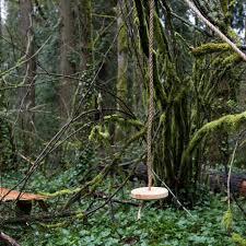 wood rope tree swing schoolhouse electric