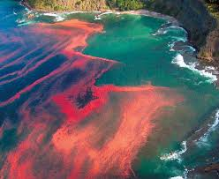 red tide u0027 phenomenon in rainbow of algal bloom colors 38 pics