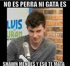 Shawn Meme - memes de shawn mendes shawn mendes and memes