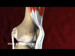 3d Knee Anatomy 3d Vedio For Knee Joint Youtube
