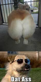 Dat Ass Cat Meme - funny pictures of dogs humor me pinterest funny pictures and