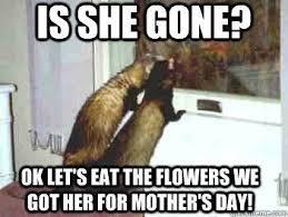 Ferret Meme - 15 hilarious and adorable ferret memes cutesypooh