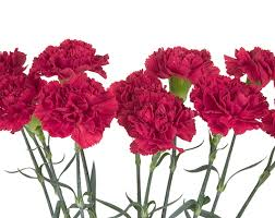 Birth Flower Of January - 28 flower for the month of january january flower month