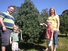 choose u0026 cut your own christmas tree at pine hill farm